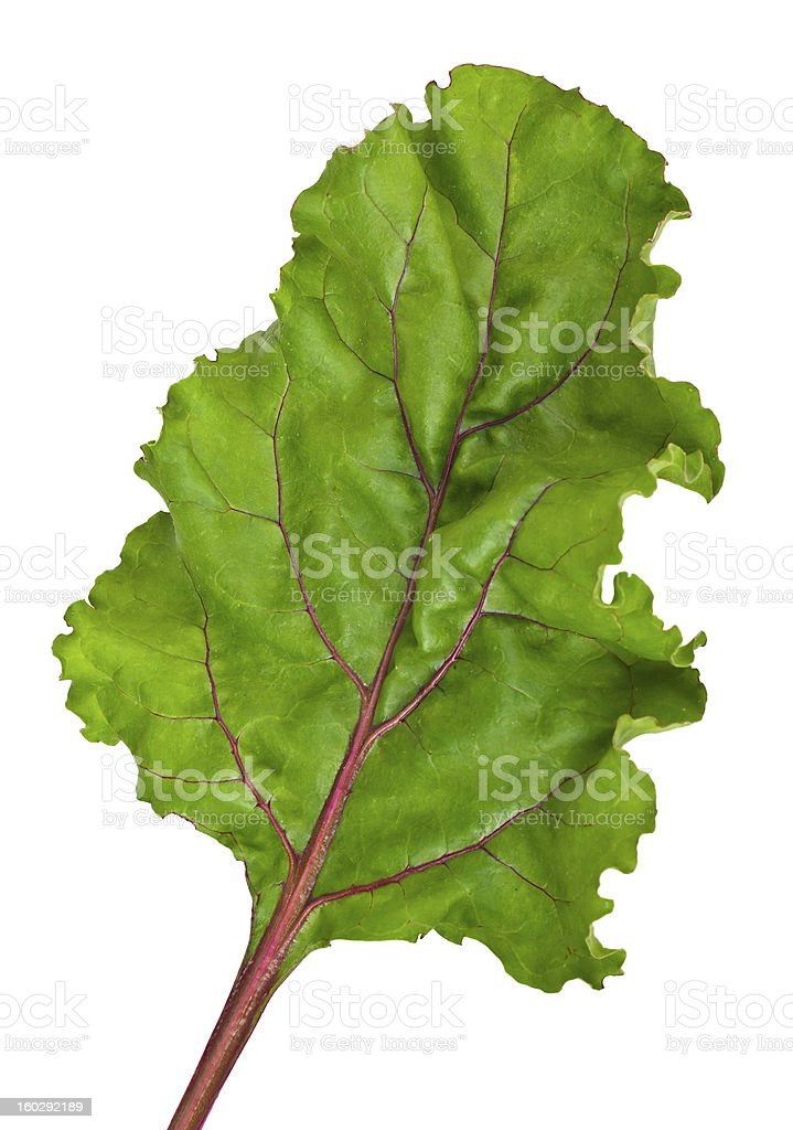 fresh leaf beet root royalty-free stock photo