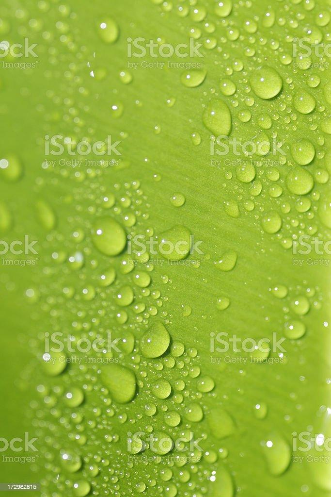 Fresh leaf macro royalty-free stock photo