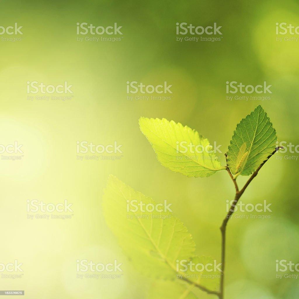 Fresh leafs royalty-free stock photo