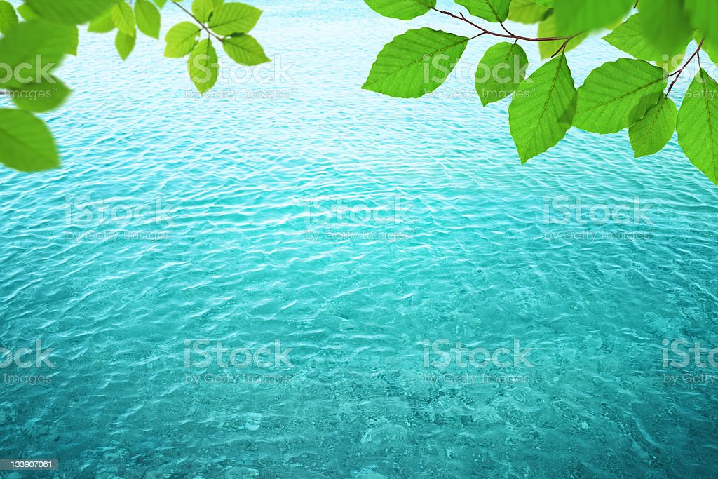 Fresh Leaves Above The Water royalty-free stock photo