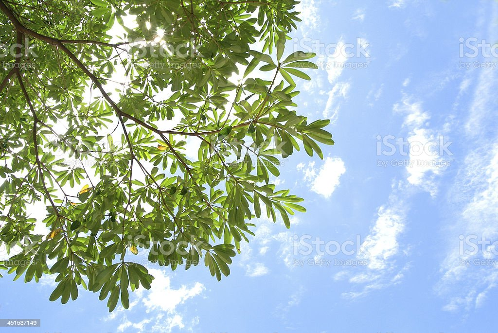 fresh leaves against the sky royalty-free stock photo