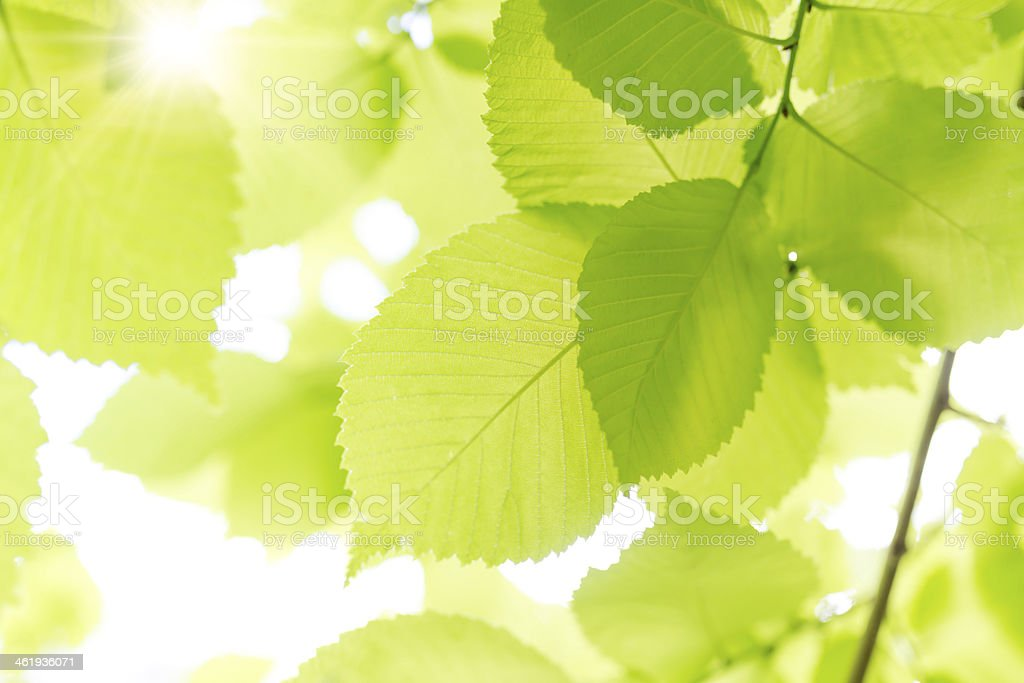 Fresh Leaves. stock photo