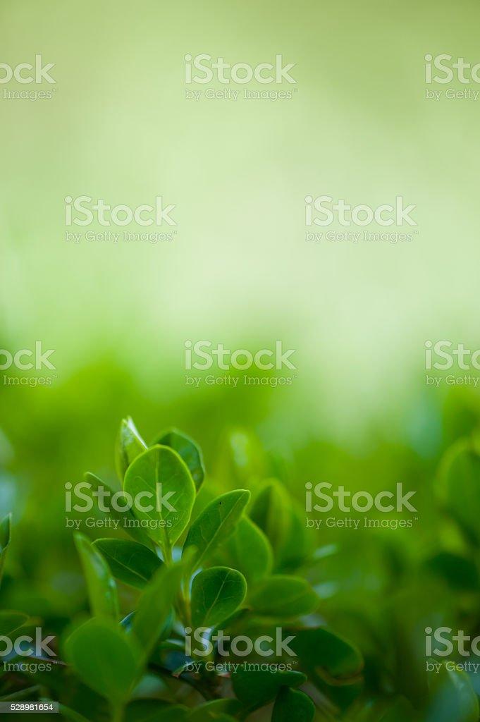 Fresh leaves stock photo