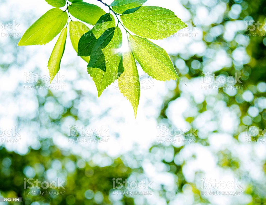Fresh leaves stock photo