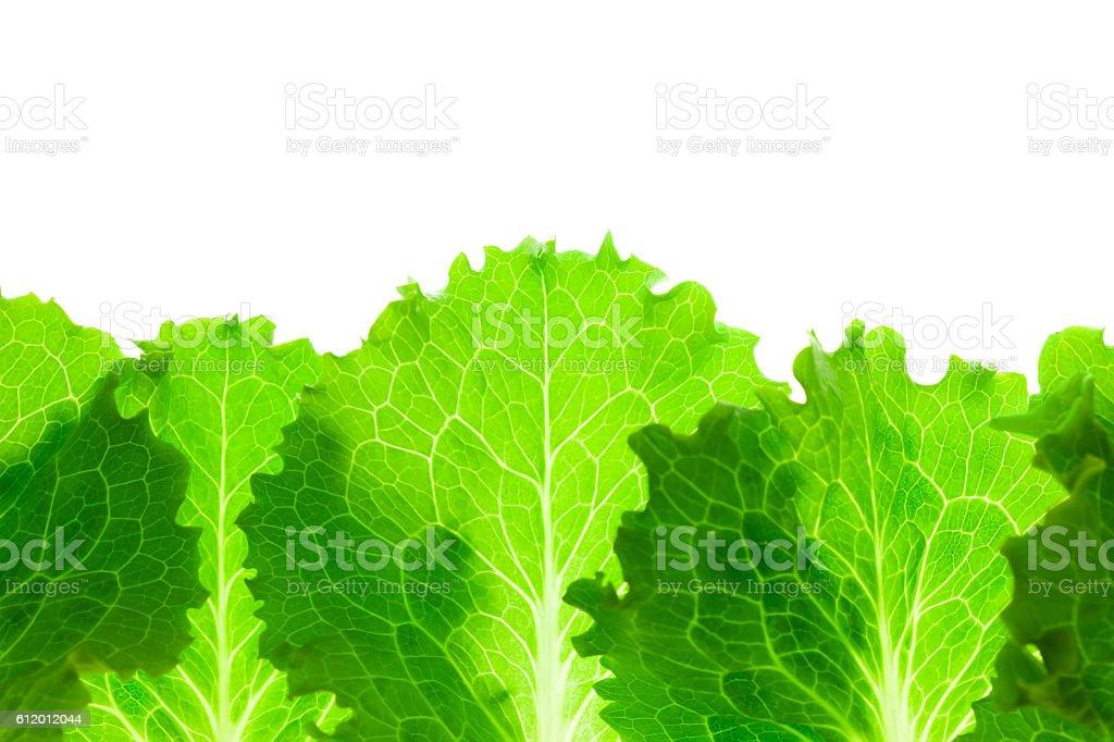 Fresh Lettuce Border /  leaves isolated on white stock photo