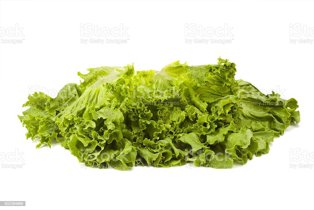 Fresh Lettuce Head stock photo
