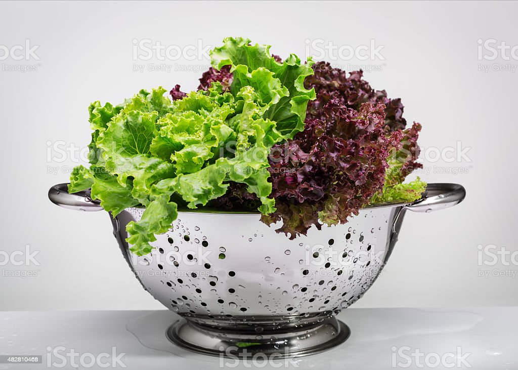 Fresh lettuce in a metal colander. stock photo