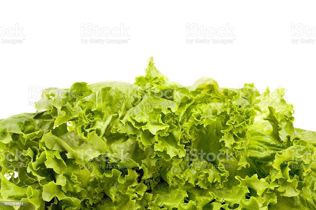 Fresh Lettuce Leaves stock photo