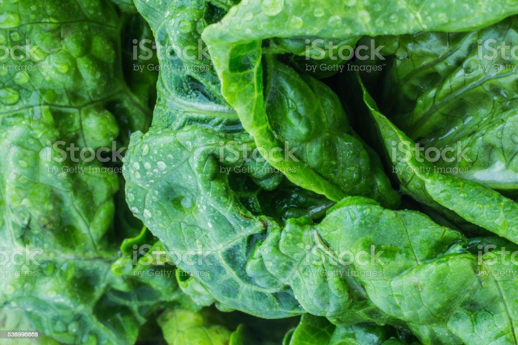 Fresh lettuce leaves stock photo