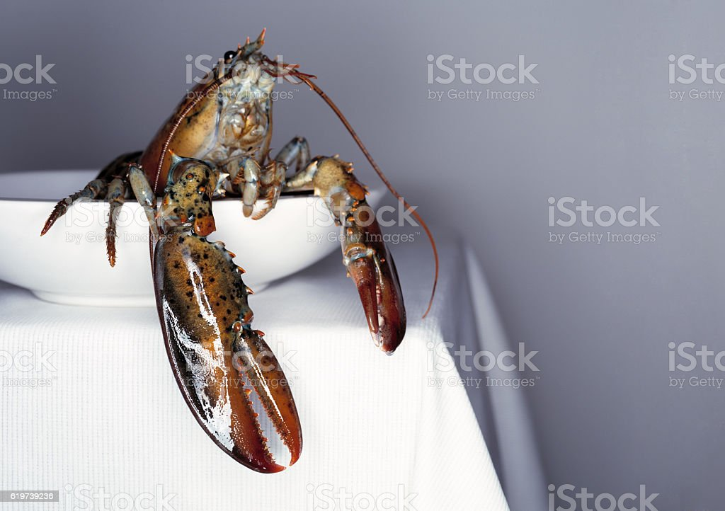 Fresh lobster on a white plate and table. stock photo