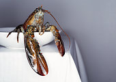Fresh lobster on a white plate and table.