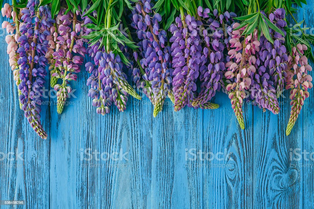 Fresh lupines arranged on old wooden background with copy space stock photo