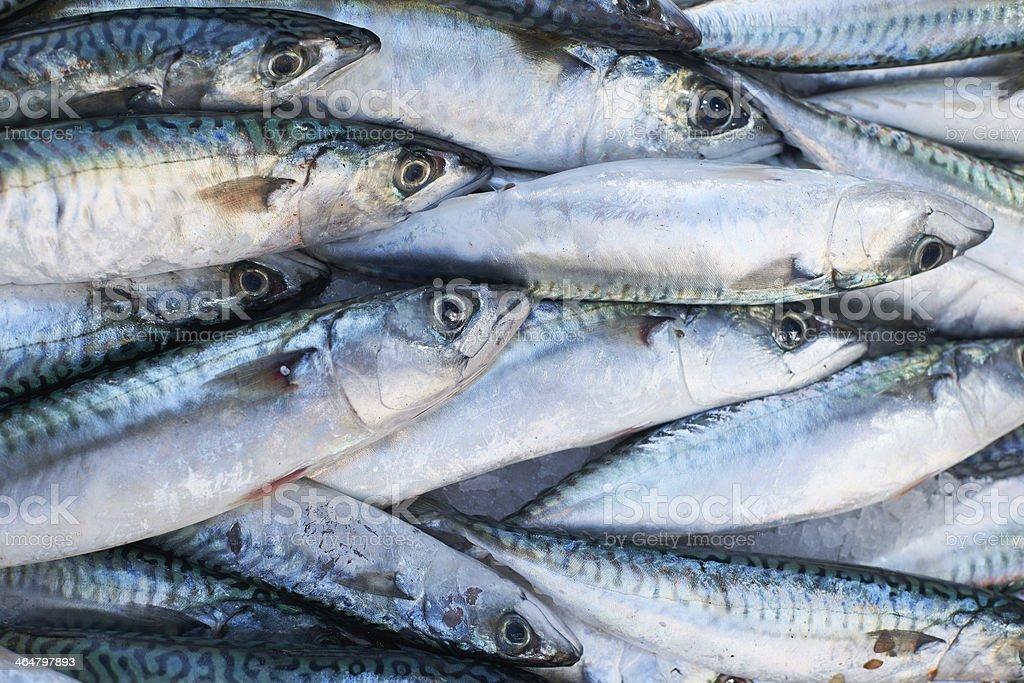Fresh mackerel fish for sale on market stock photo