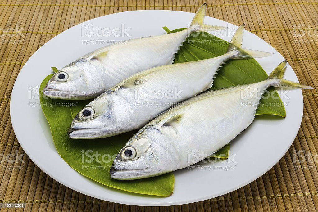 Fresh mackerel fish. royalty-free stock photo