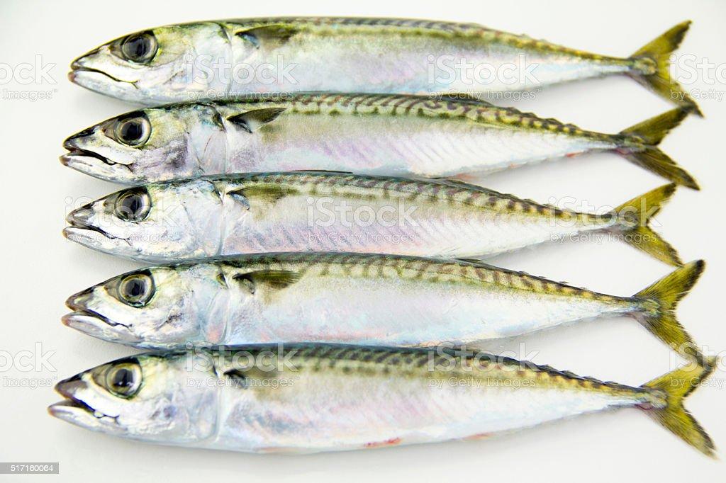 Świeże Makrela ryb zbiór zdjęć royalty-free