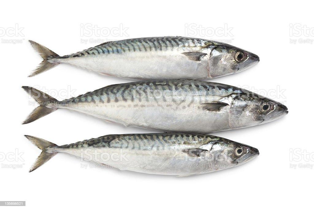 Fresh mackerel fishes stock photo