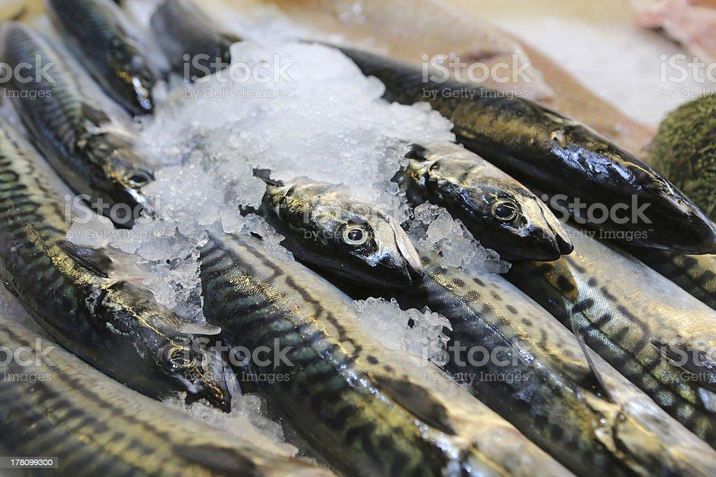 Fresh Mackerel royalty-free stock photo