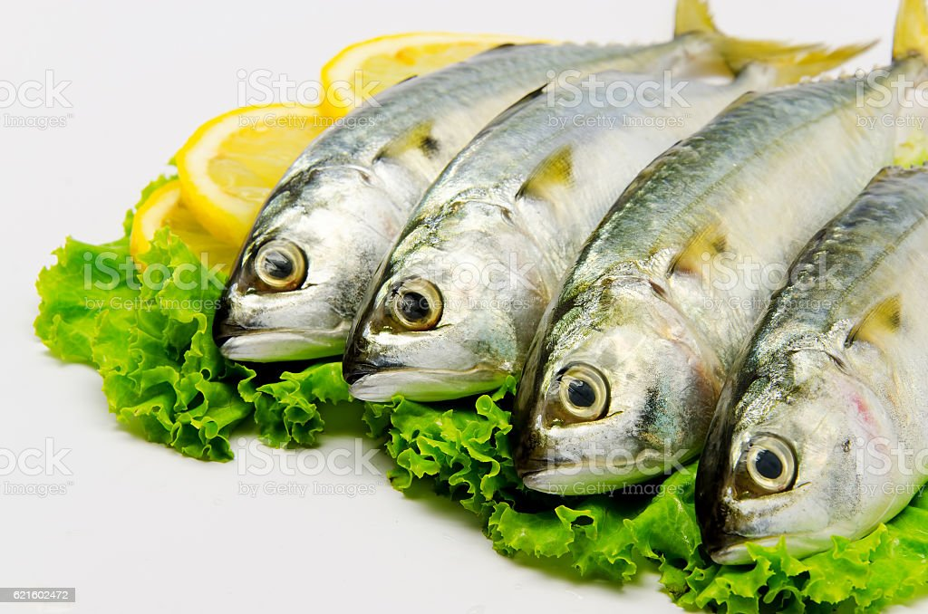 Fresh Mackerel stock photo