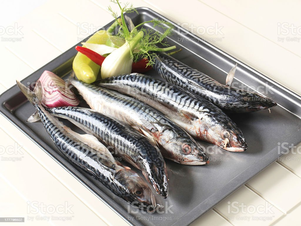 Fresh mackerels royalty-free stock photo