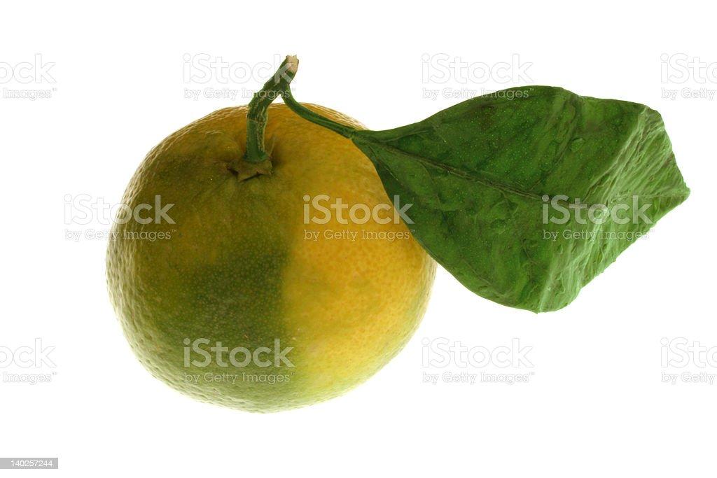 fresh mandarie stock photo