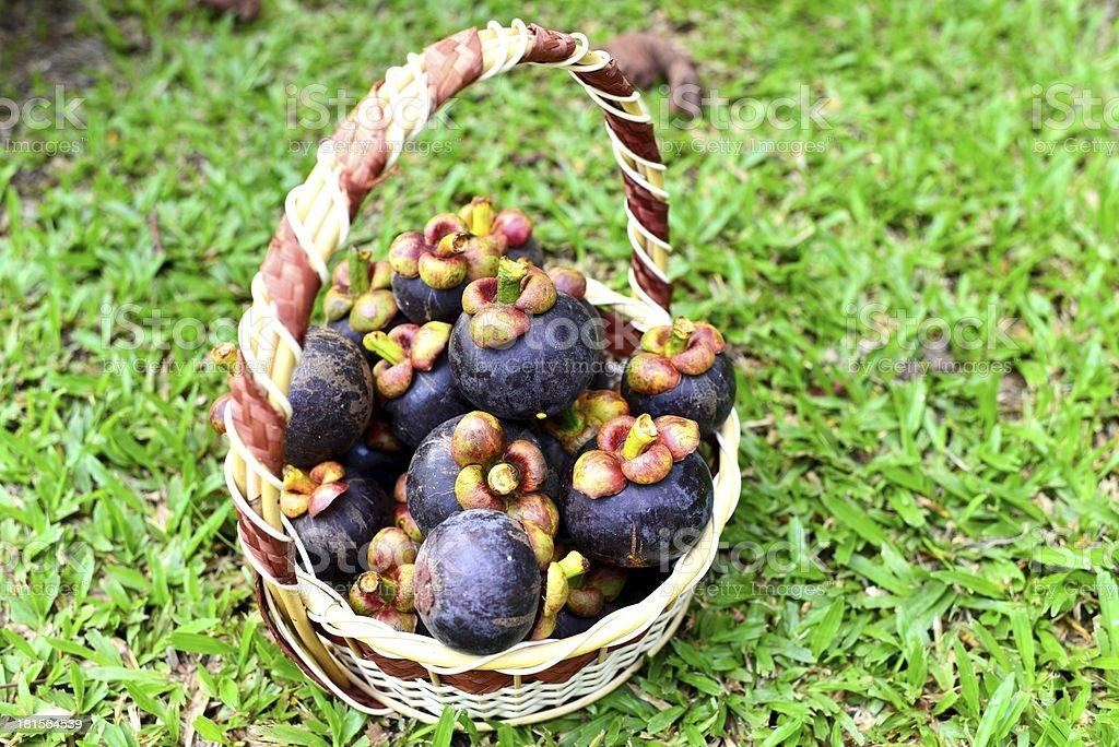 Fresh mangosteen fruit royalty-free stock photo