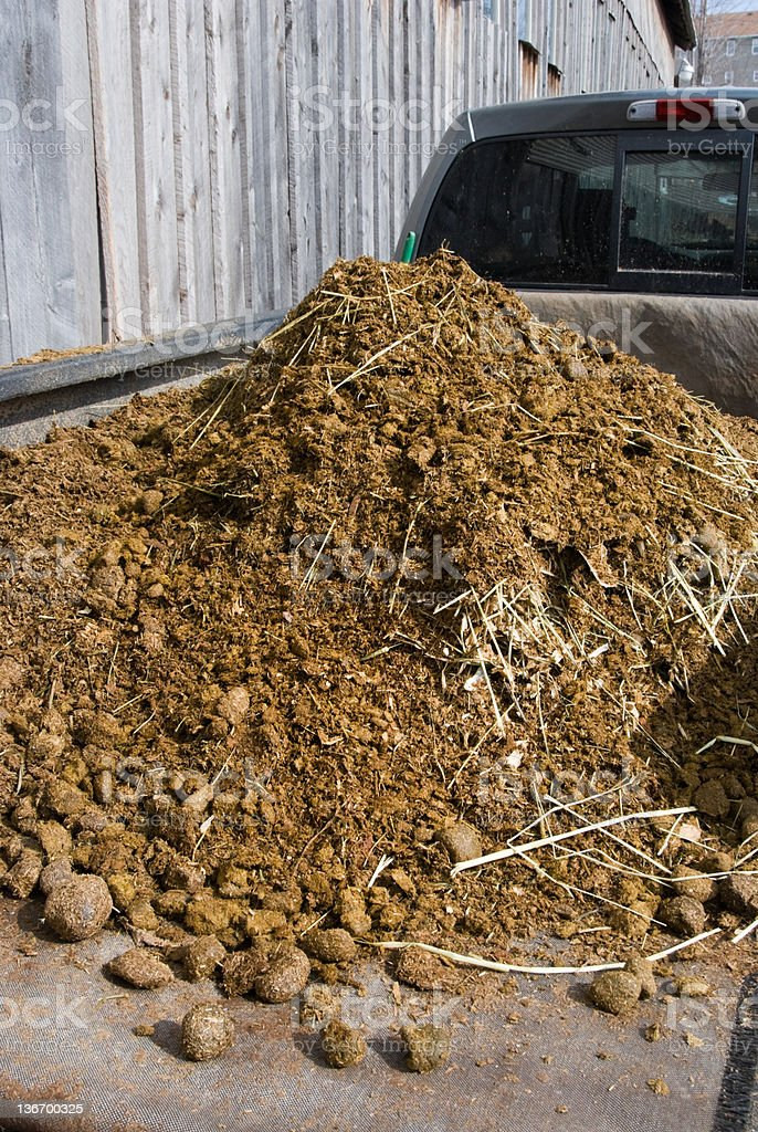 Fresh Manure Load on Truck at Barn, Farming and Agriculture royalty-free stock photo
