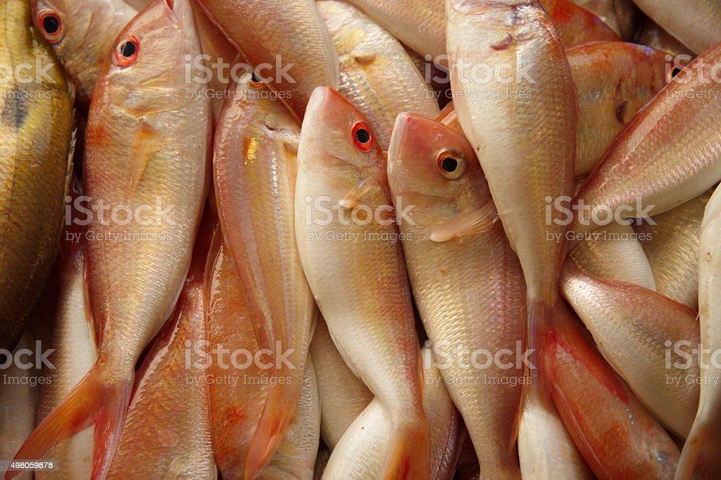 fresh marine fish in market stock photo