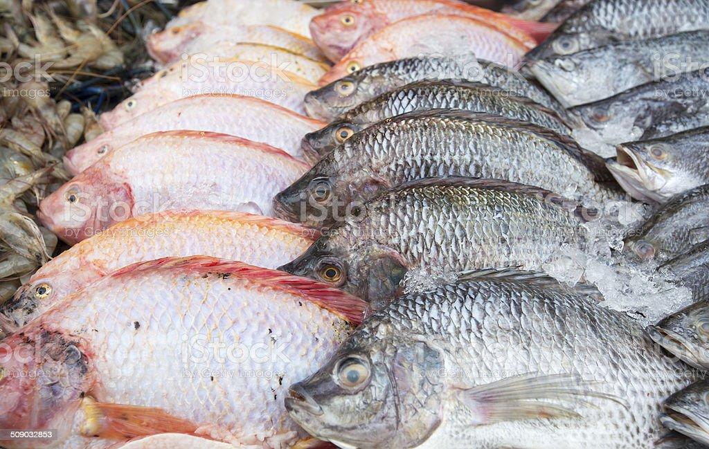 Frisch market Fisch Lizenzfreies stock-foto