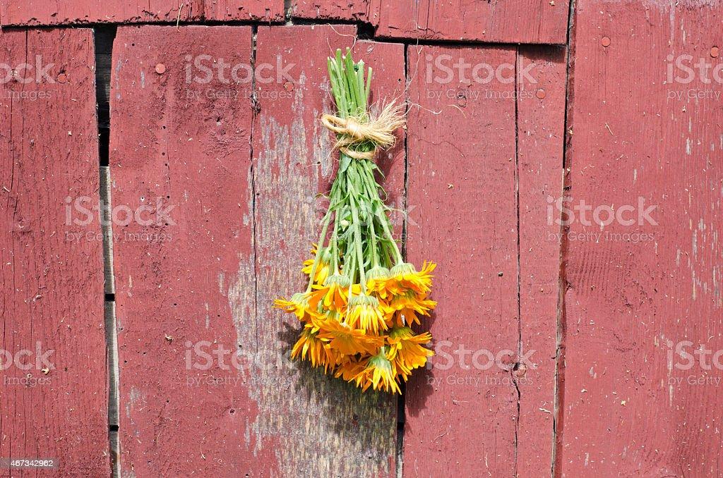 fresh medical calendula marigold flower bunch on old barn wall stock photo
