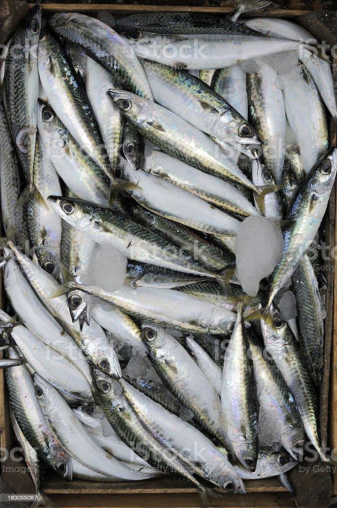 Fresh mediterranean fish stock photo