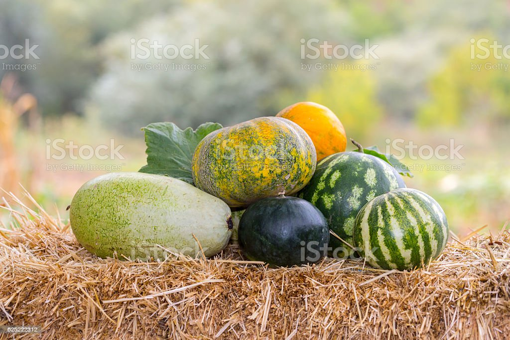 Fresh melons on a straw stock photo