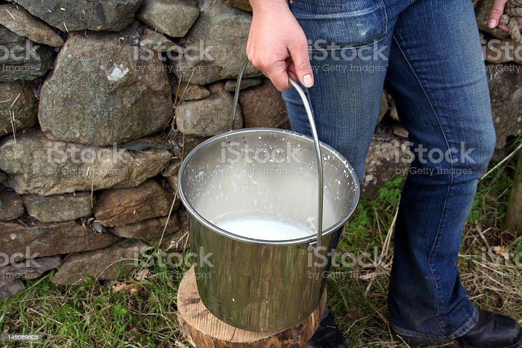 Fresh Milk in a Bucket royalty-free stock photo