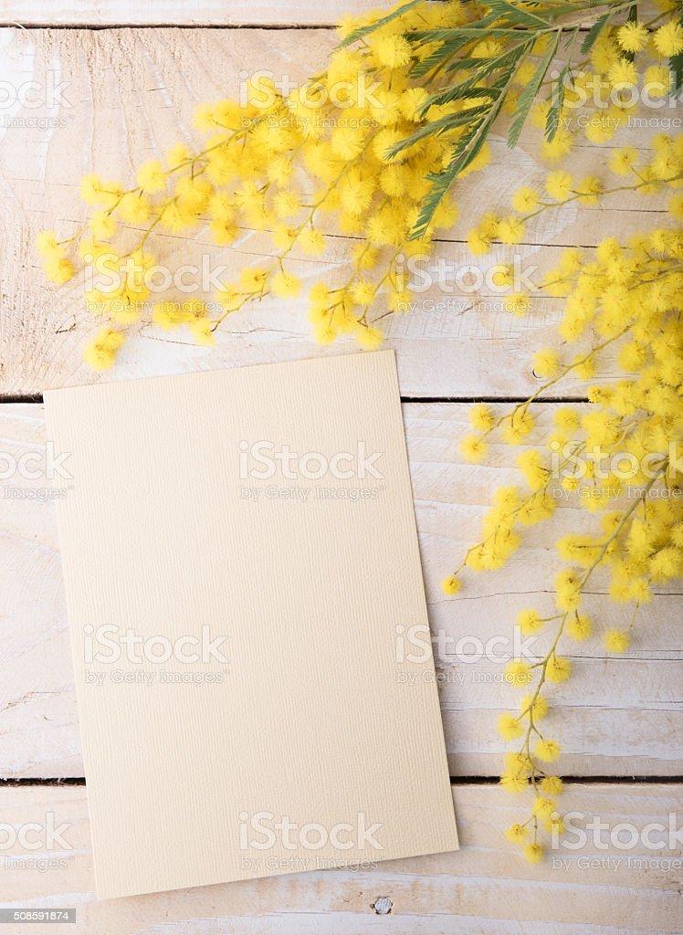 Fresh mimosa flower on wooden table stock photo