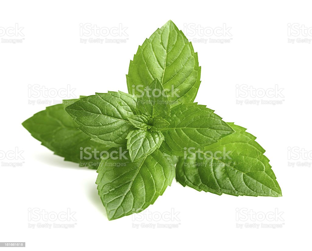 Fresh mint in closeup stock photo