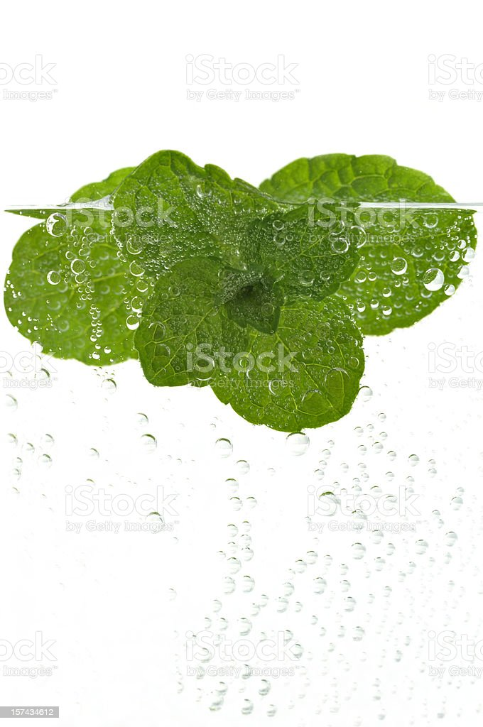 Fresh mint in water stock photo