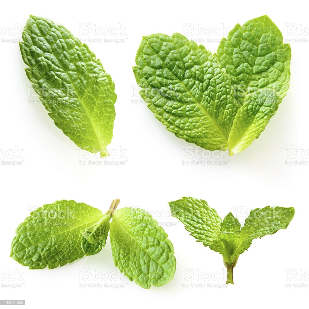 Fresh mint isolated on a white. Collection stock photo