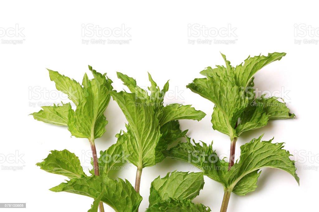 Fresh mint isolated on white background stock photo