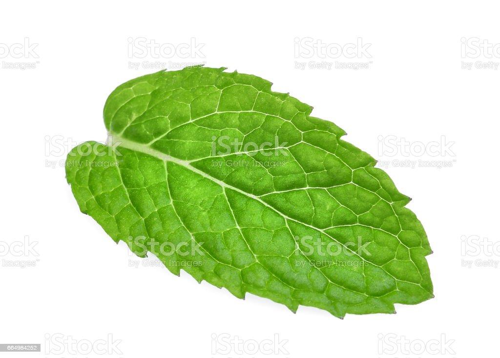fresh mint leaf isolated on white background stock photo