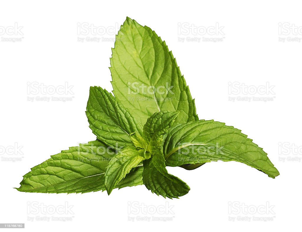 Fresh mint leaves isolated on a white background royalty-free stock photo