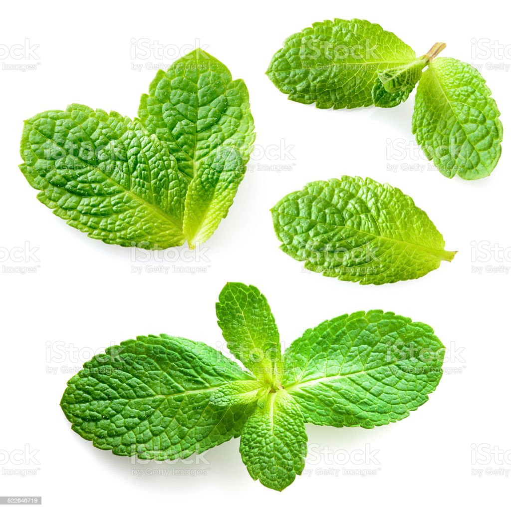 Fresh mint leaves isolated on white background. Collection stock photo