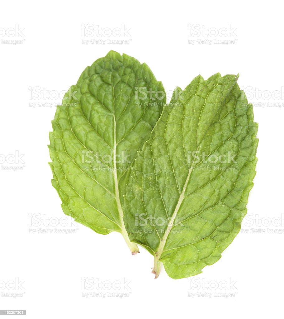 fresh mint leaves isolated on white background. Studio macro royalty-free stock photo