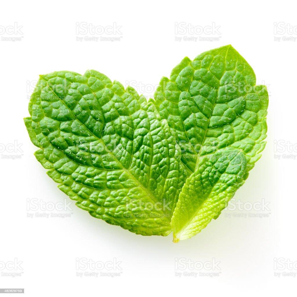 Fresh mint leaves isolated on white background. Studio macro stock photo