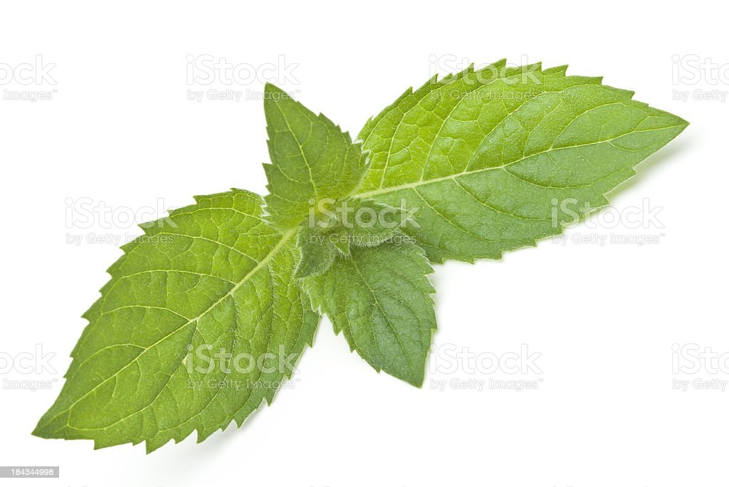 Fresh mint leaves royalty-free stock photo