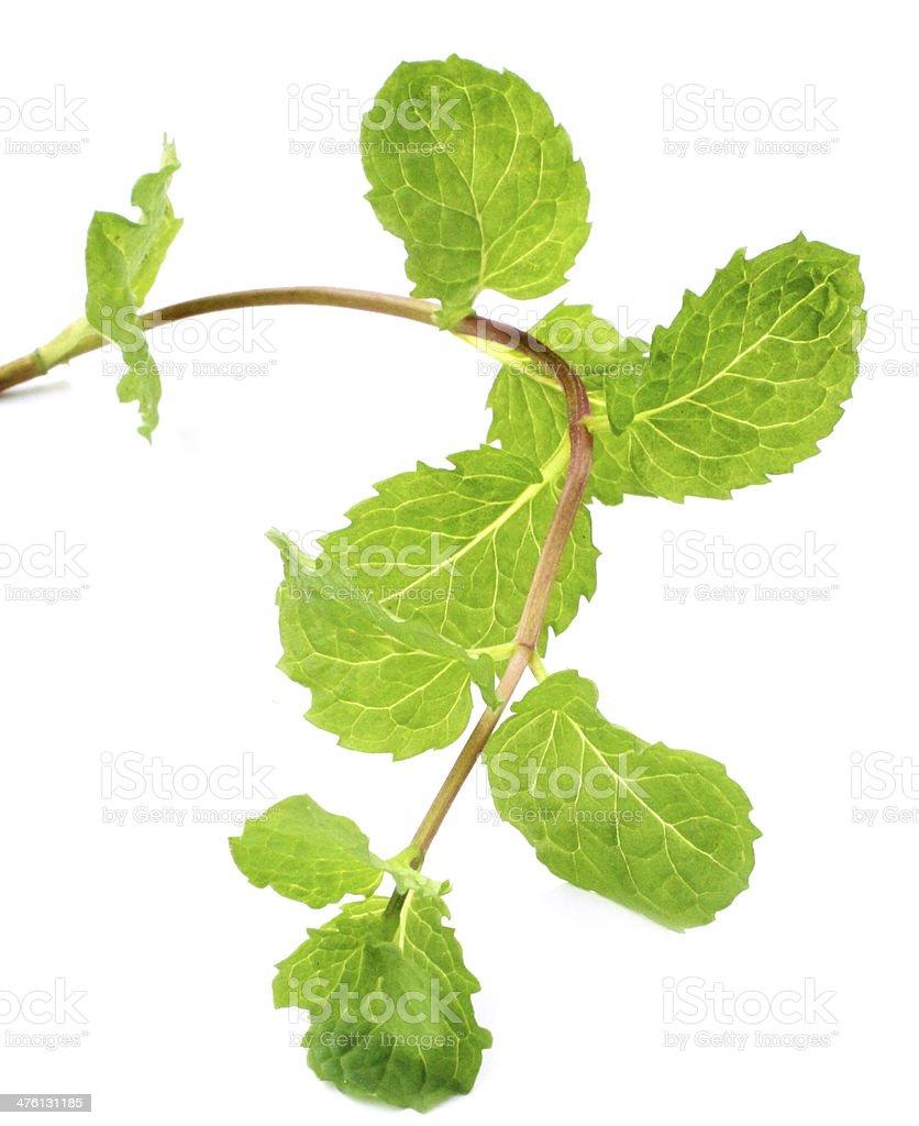 Des feuilles de menthe fraîche photo libre de droits