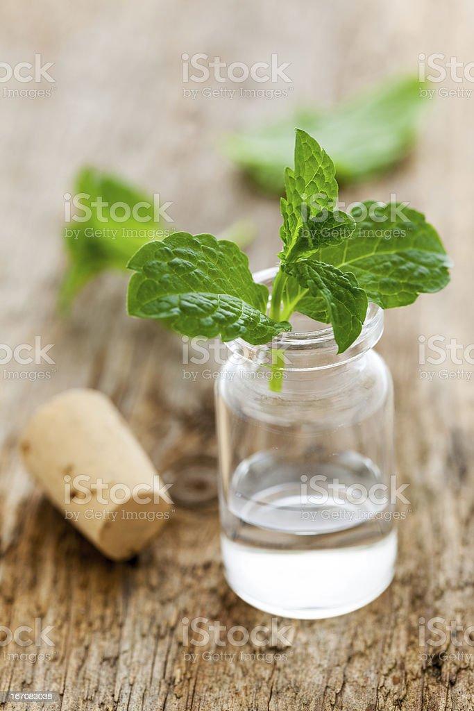 fresh mint oil royalty-free stock photo