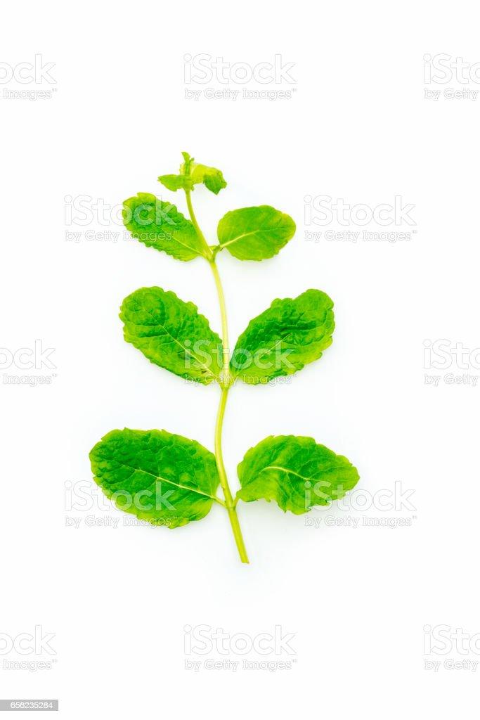 Fresh mint on white background stock photo