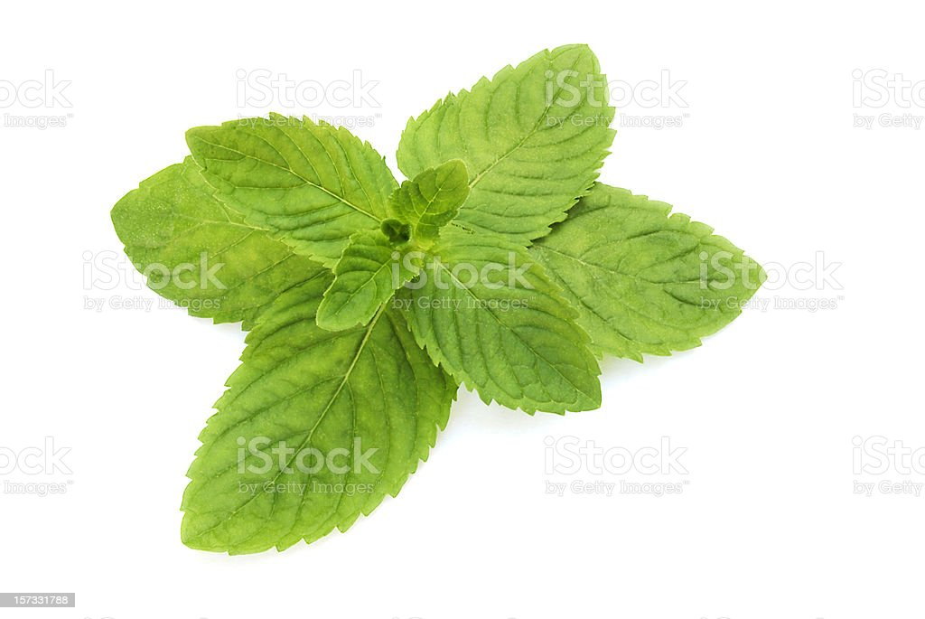 Fresh Mint (Mentha) royalty-free stock photo