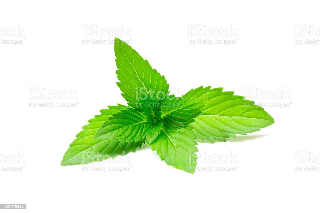 Fresh mint stock photo
