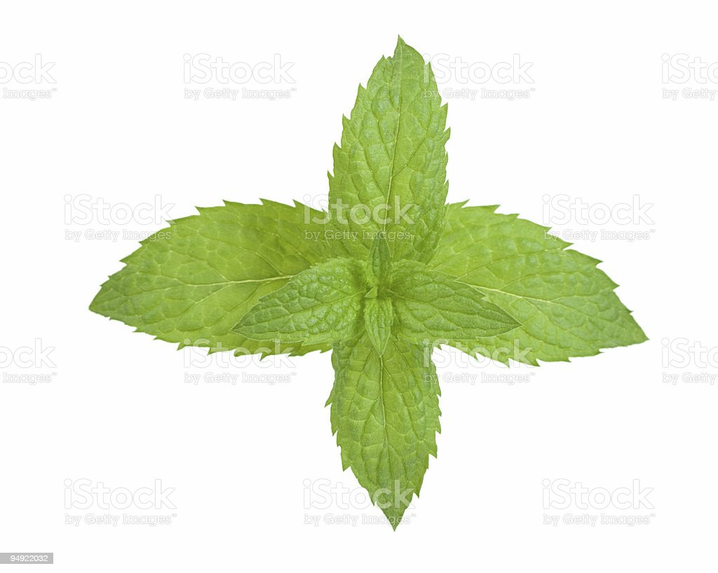 fresh mint royalty-free stock photo