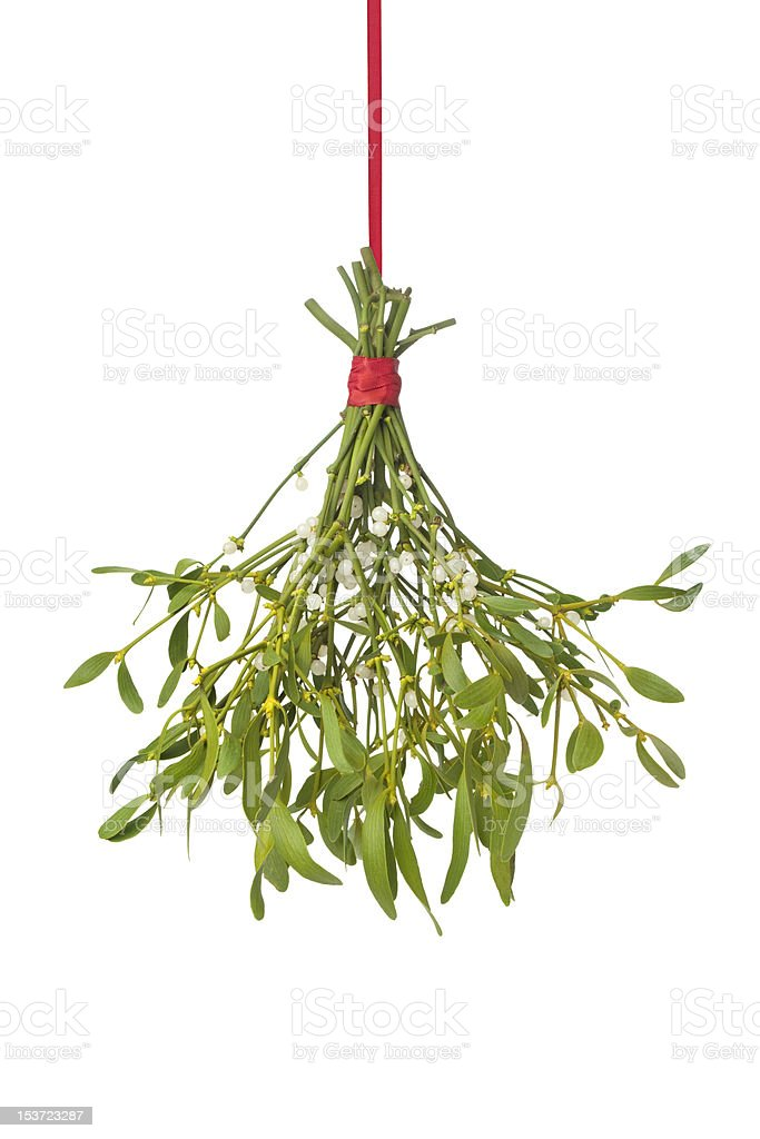 Fresh mistletoe hanging on a red ribbon stock photo